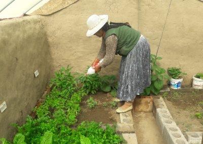 Mantenimiento de cultivo