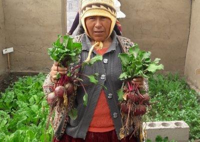 Producción de verduras y hortalizas en biohuerto