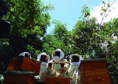 familias productoras de Palta en Omate, por contribución de la polinización (3)