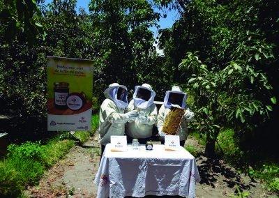 familias productoras de Palta en Omate, por contribución de la polinización (4)