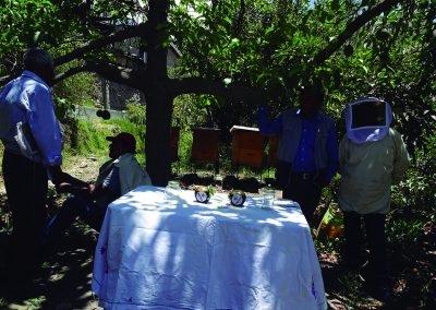 familias productoras de Palta en Omate, por contribución de la polinización (5)