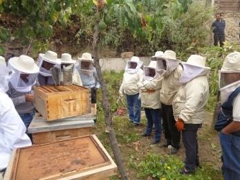 Capacitación especializada a promotores y apicultores en polinización cruzada del palto
