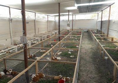Construcción e implementación de galpón comercial con una capacidad de 400 reproductoras sector Pampa los Arrastrados del distrito Torata.