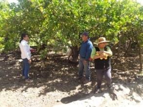 Visita de la empresa APC para evaluar posibles compras de frutas